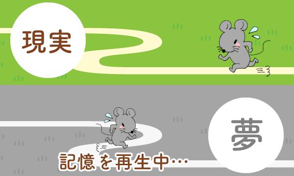 夢で現実の記憶を再生するマウス