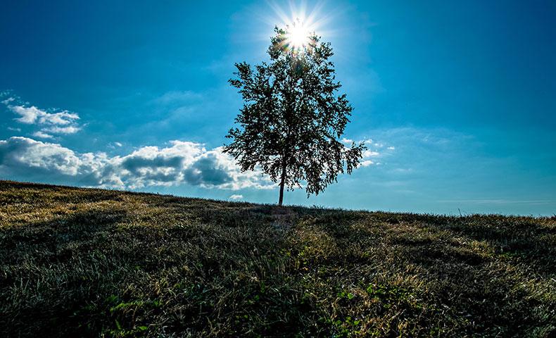 Simplicity2で使われている木の逆光写真