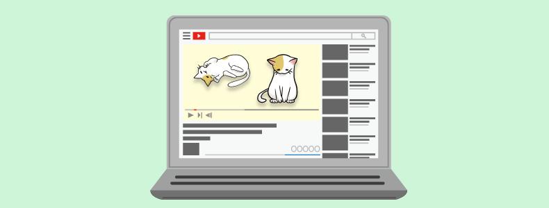 パソコンと猫の動画