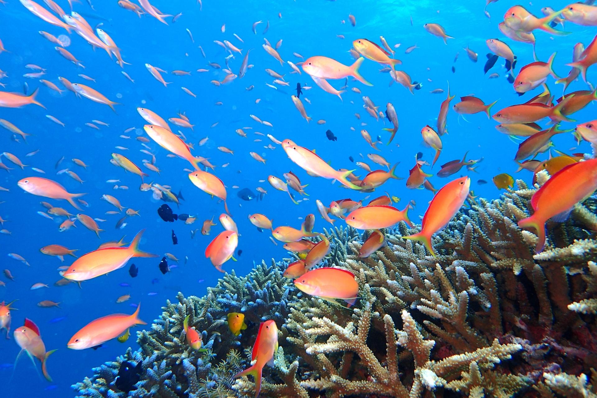 熱帯魚たちの写真
