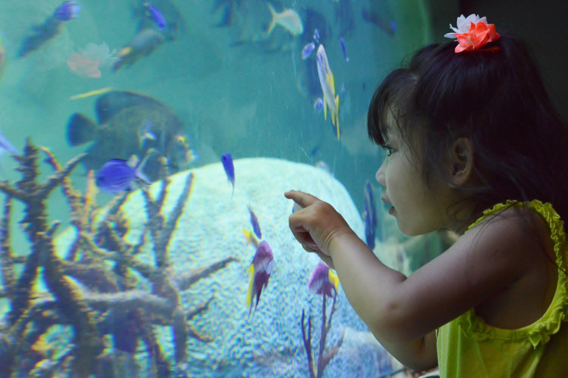 熱帯魚と子ども