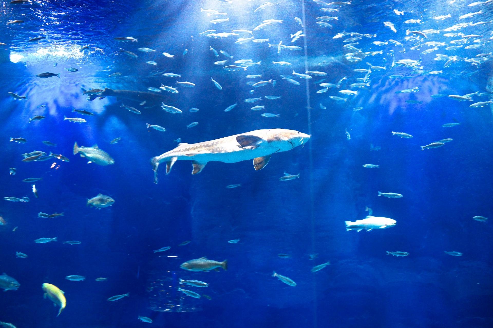 水族館の景色