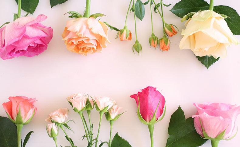 バラの花のイメージ写真
