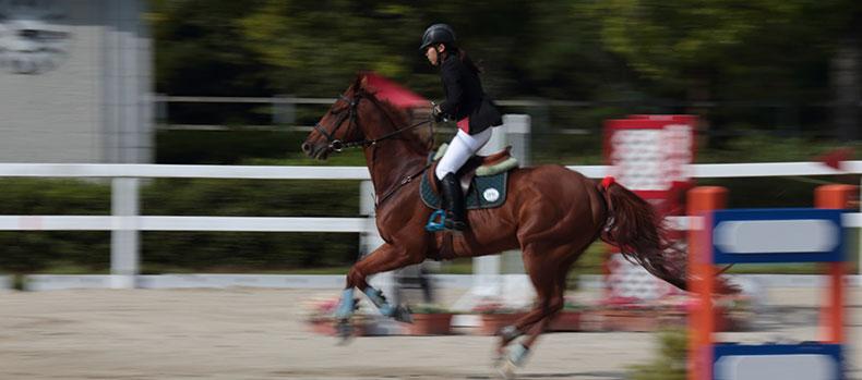 乗馬の写真